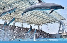 名古屋港水族館の入場券を割引する3つの方法