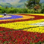 くじゅう花公園割引をまとめてみた・ベネステ特別デーで入園料金無料!