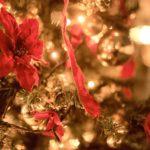 サンシャイン水族館クリスマス限定イベント